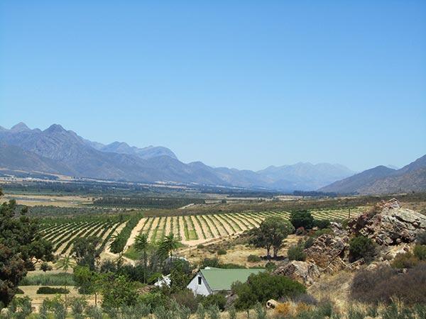 Wijn uit Zuid Afrika